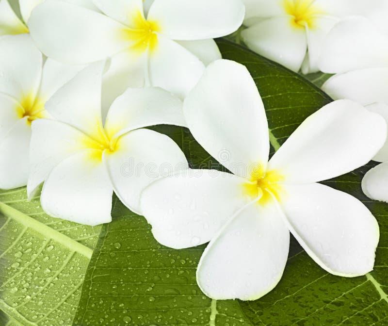 fleurs exotiques tropicales photographie stock libre de droits