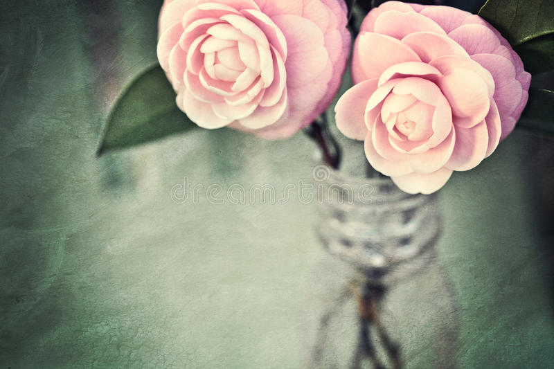 Fleurs féminines de camélia avec la texture de cru photographie stock