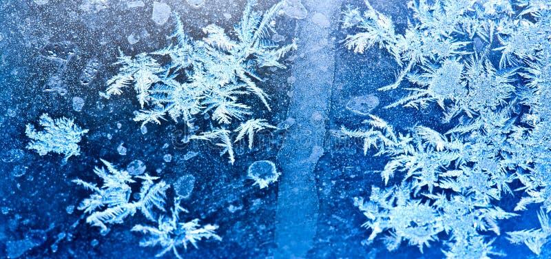 Fleurs figées de glace image libre de droits