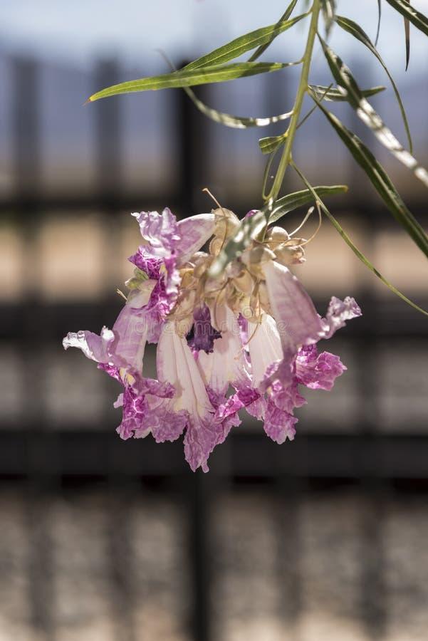 Fleurs florales d'arbre à la conserve de Mojave de dépôt de Kelso images stock