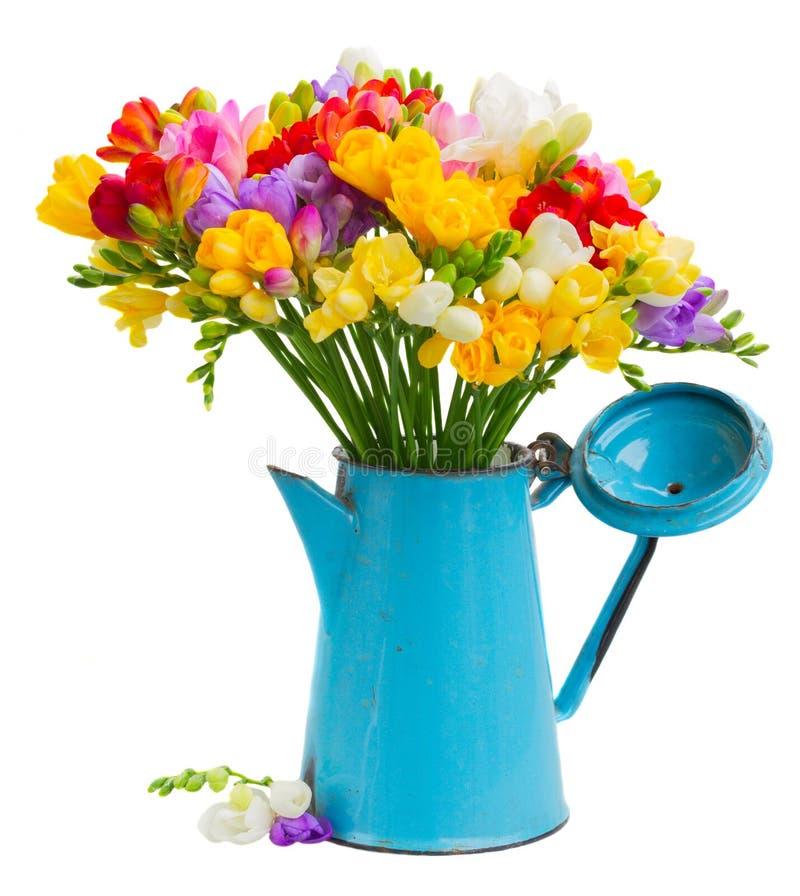 Fleurs fraîches de freesia photo stock