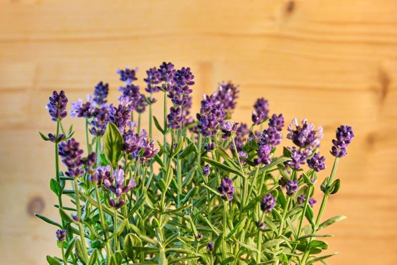 Fleurs fraîches de lavande dans la décoration aromatique à la maison photo libre de droits