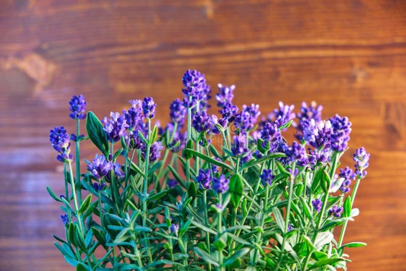 Fleurs fraîches de lavande dans la décoration aromatique à la maison photo stock