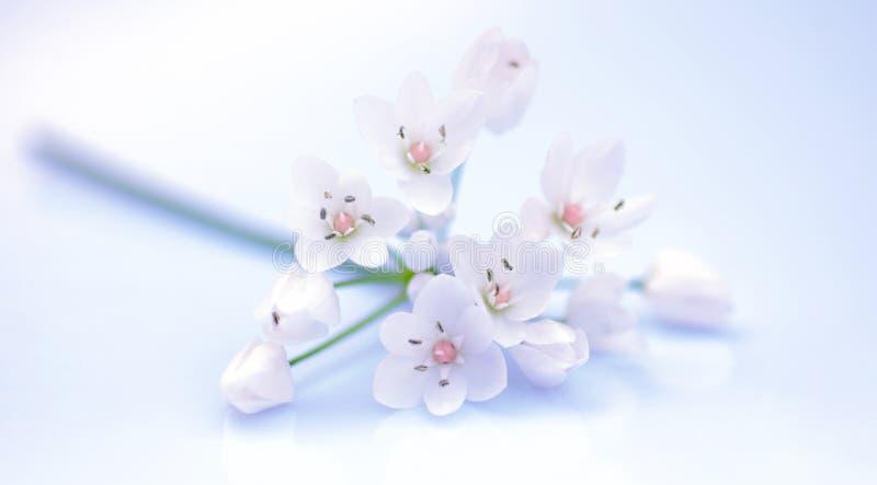 Fleurs fraîches de source image stock