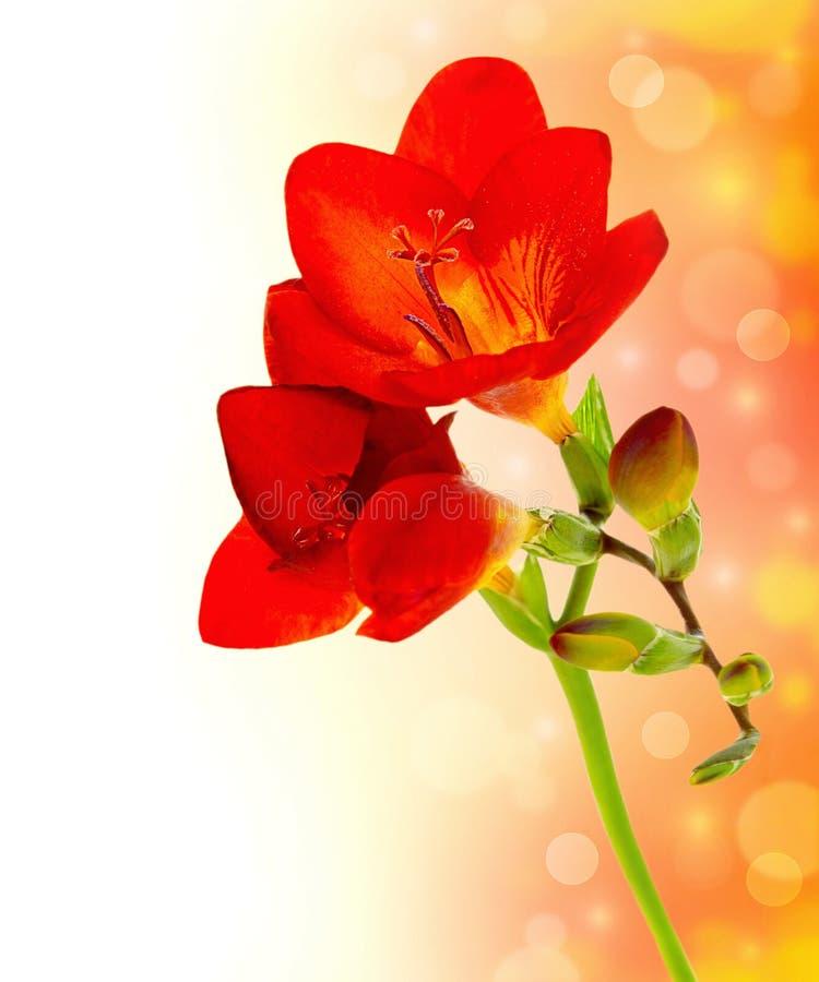 Fleurs fraîches de source photographie stock libre de droits