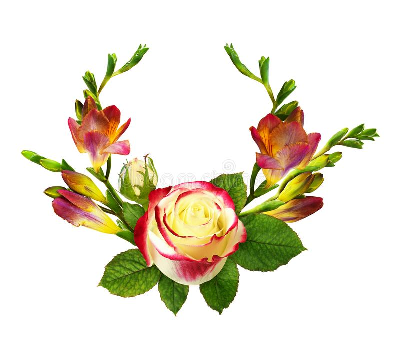 Fleurs fraîches et rose rouges et jaunes de freesia dans l'arrangement floral illustration de vecteur