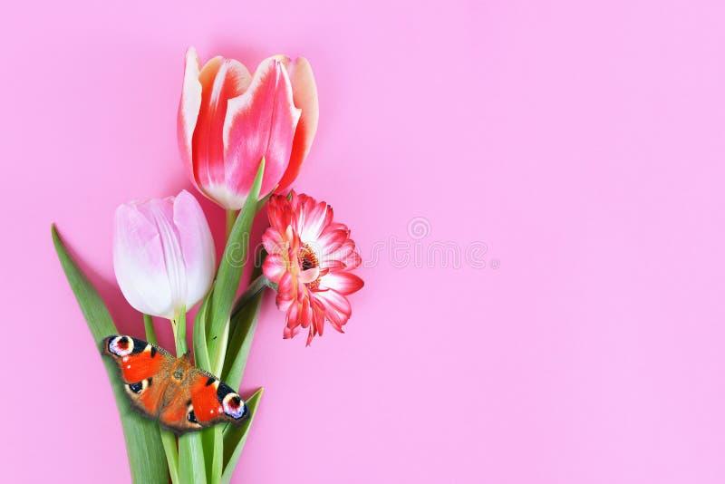 Fleurs gerbera et tulipe de ressort avec le papillon image libre de droits