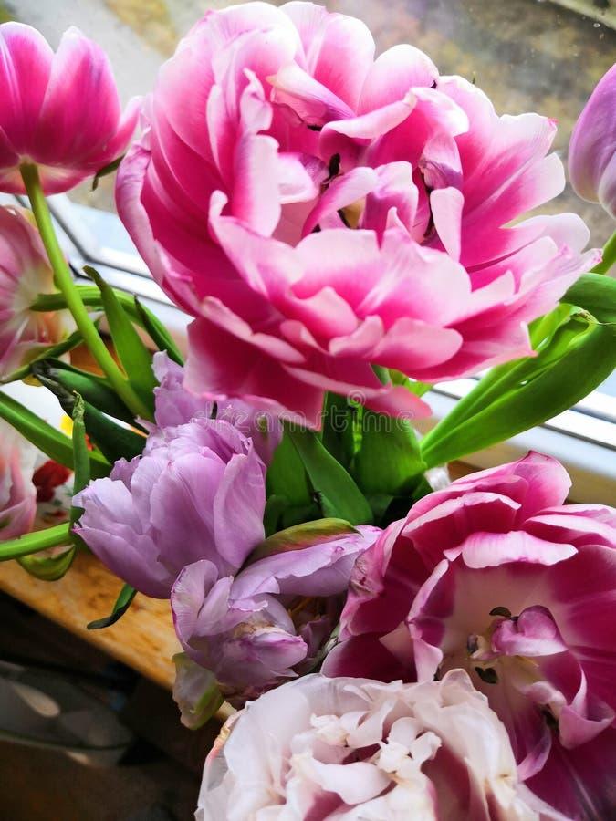 Fleurs Girly photographie stock libre de droits