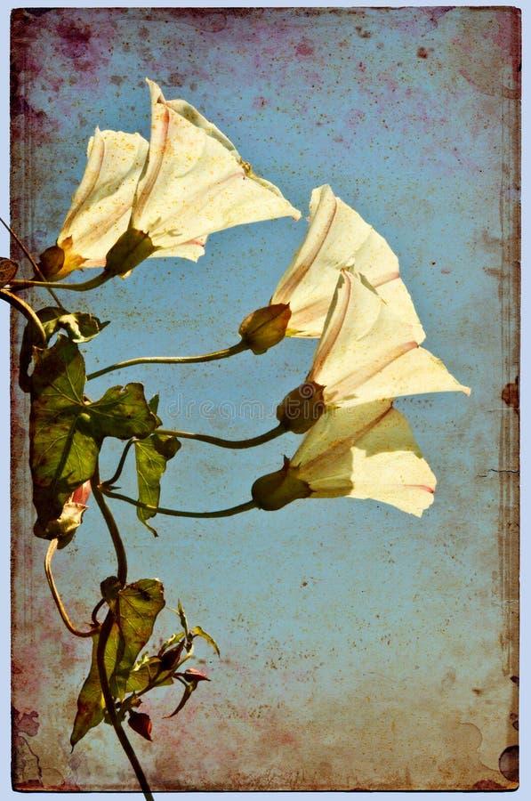 Fleurs grunges illustration libre de droits