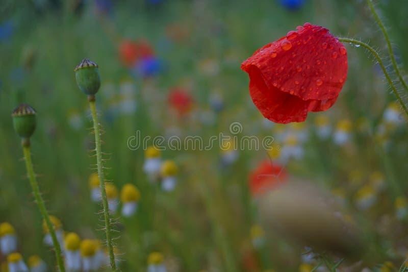 Fleurs humides après pluie photos stock