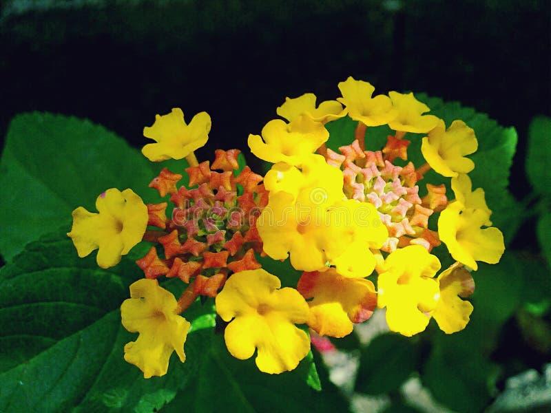 Fleurs jaune-orange et rouges photographie stock