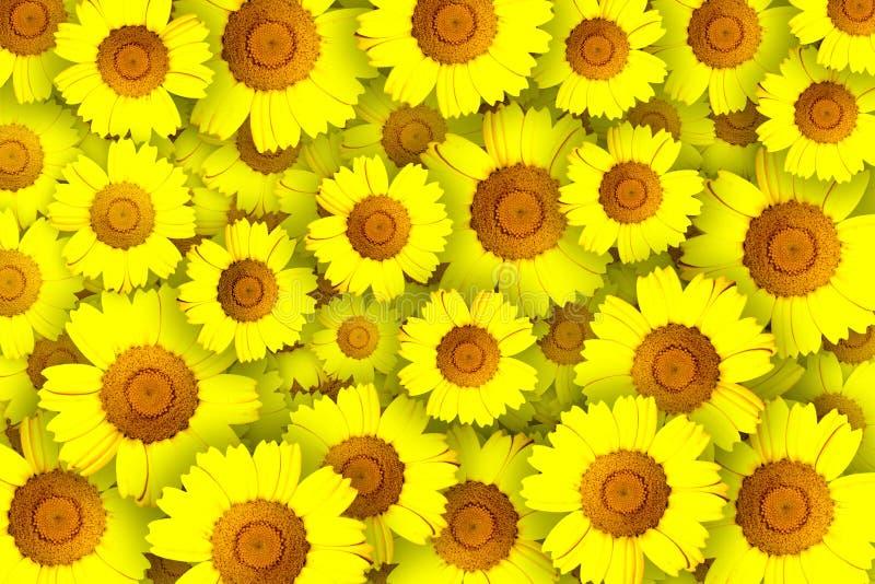 Fleurs jaunes illustration libre de droits