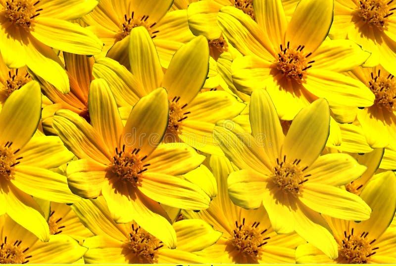 Fleurs jaunes. photos libres de droits