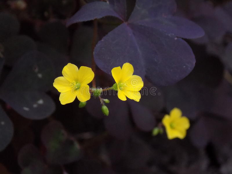 Fleurs jaunes photo stock