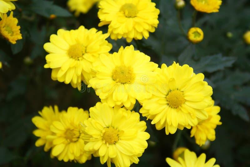 Fleurs jaunes au jardin après avoir plu image stock