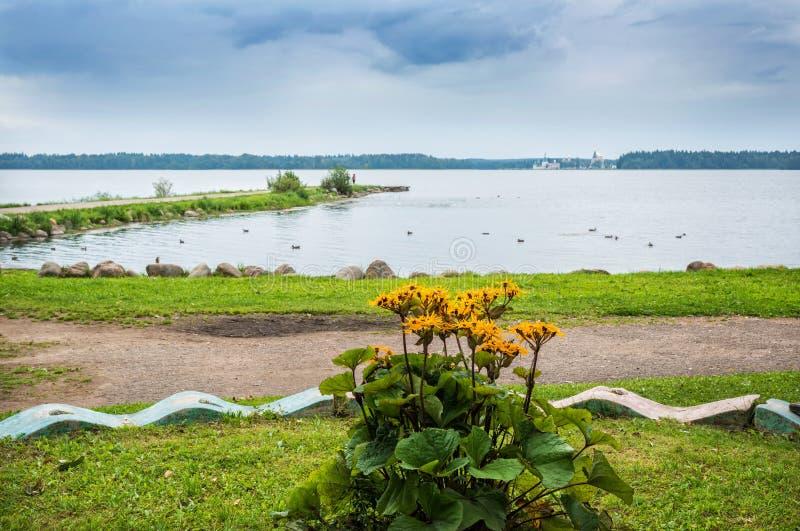 Fleurs jaunes au lac Valdai photos libres de droits