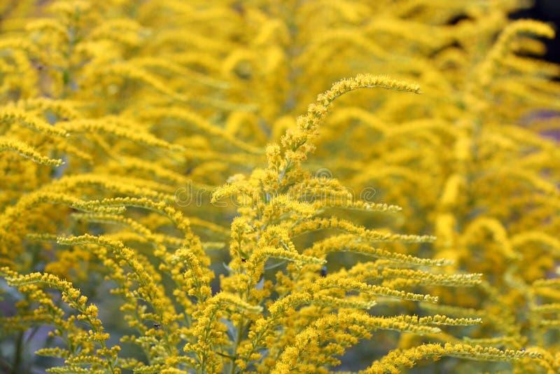 Fleurs Jaunes D Ete Fleur Jaune Grande Tige Collegecalvet66