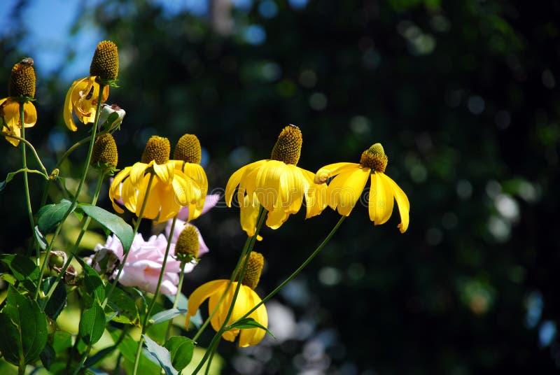 Fleurs jaunes dans des environs naturels image stock