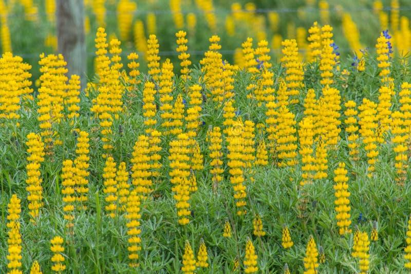 Fleurs jaunes dans le domaine image libre de droits