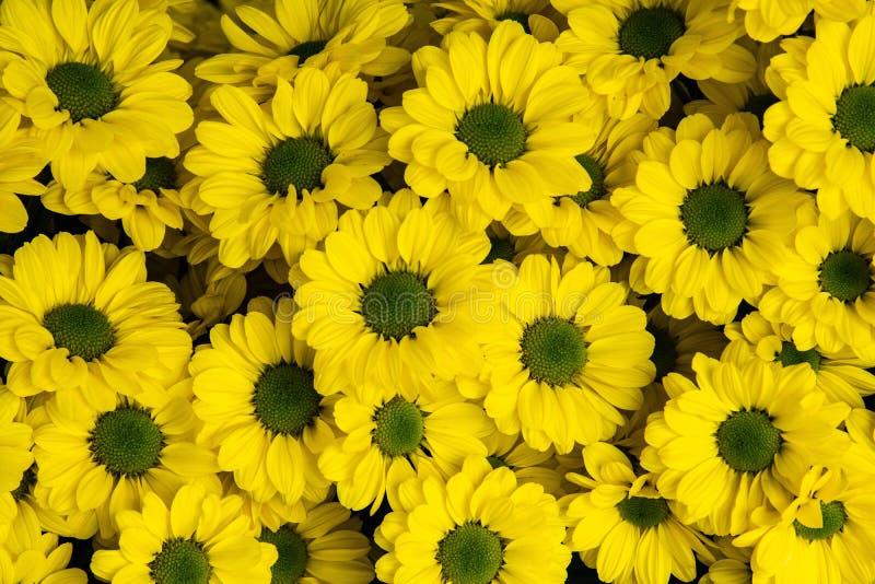 Fleurs jaunes dans le jardin image stock