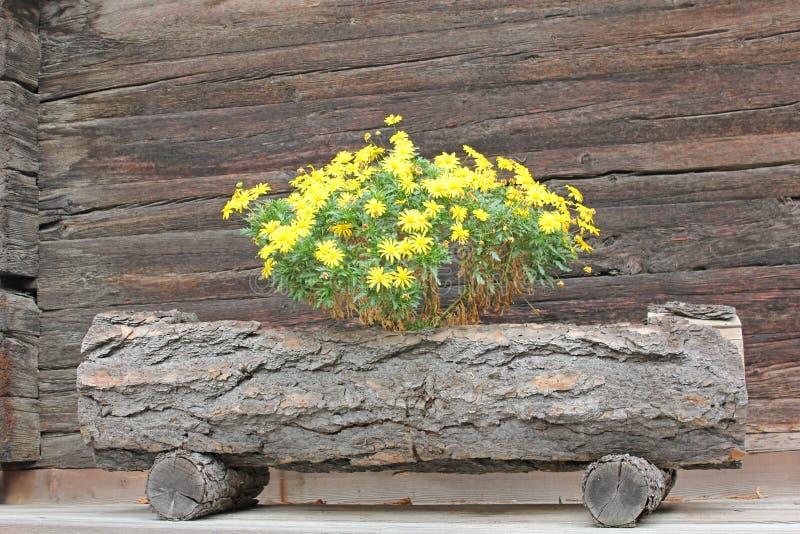 Fleurs jaunes dans une fontaine en bois image stock