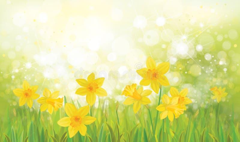 Fleurs jaunes de jonquille de vecteur illustration stock