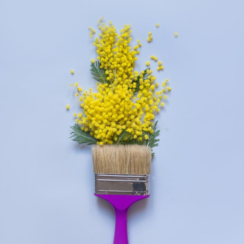 Fleurs jaunes de mimosa et pinceau pourpre sur le bleu Configuration créative d'appartement Ressort images libres de droits