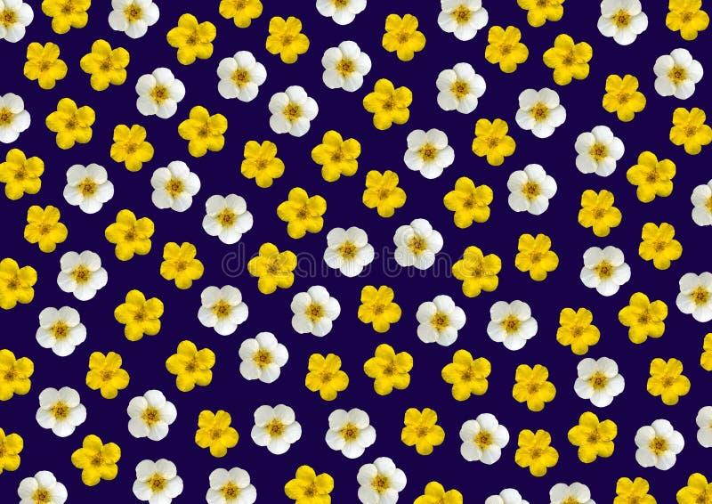 Fleurs jaunes et blanches photo libre de droits