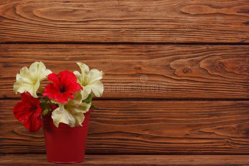 Fleurs jaunes et pétunias rouges dans un seau photos libres de droits