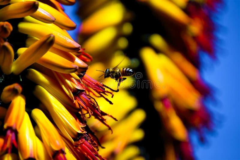 Fleurs jaunes, fond jaune, fourmi photographie stock libre de droits
