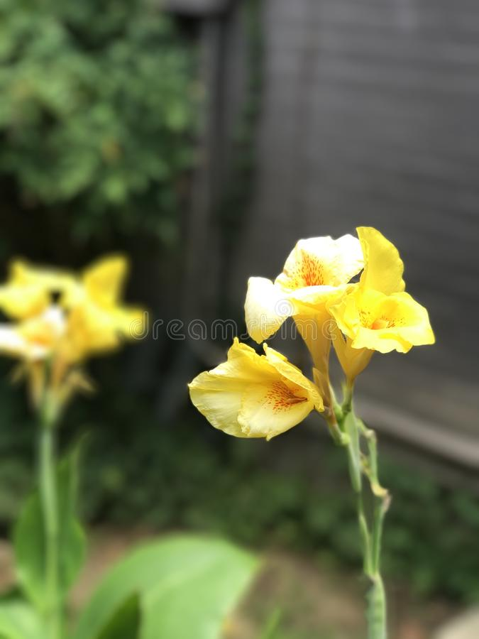 Fleurs jaunes lumineuses photos stock