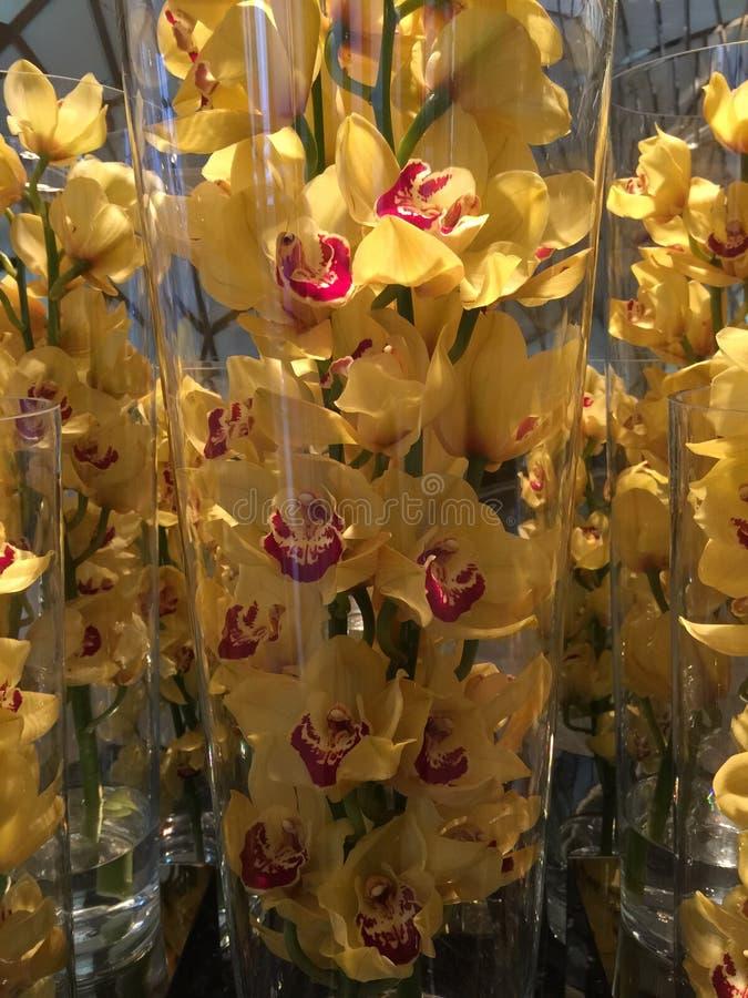 Fleurs jaunes, orchidées photo libre de droits