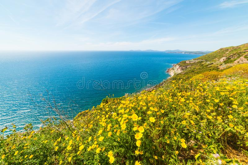 Fleurs jaunes par la mer en Sardaigne photo stock