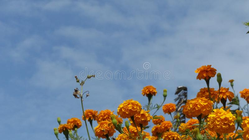 Fleurs jaunes sous un ciel bleu photo libre de droits