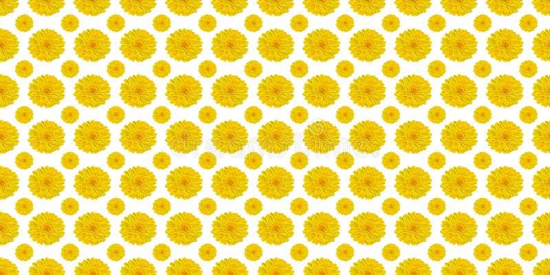 Fleurs jaunes sur le blanc images libres de droits