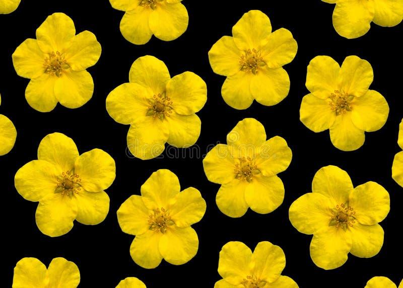 Fleurs jaunes sur un noir image stock