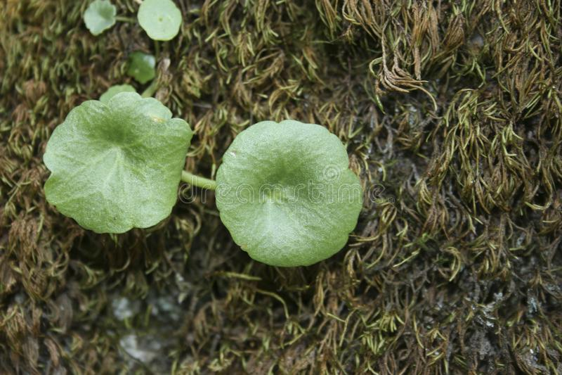 Fleurs jumelles vertes rondes photographie stock libre de droits