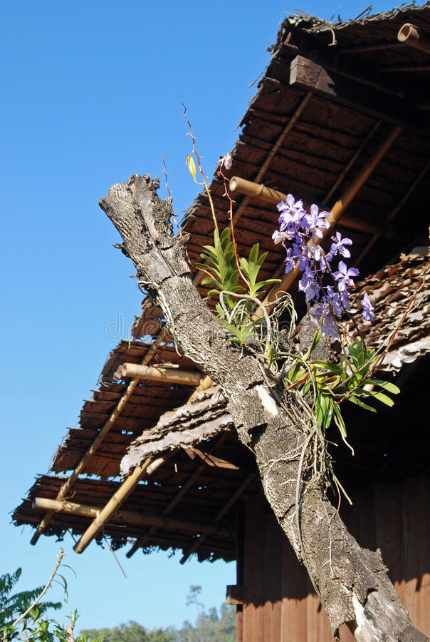 Fleurs - Karen Tribal Village blanc, Mae Hong Son, Thaïlande images stock