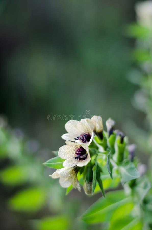 Fleurs légères de la cloche avec un modèle peu commun sur les pétales Mod?le de texture Macro Fond brouill? image libre de droits