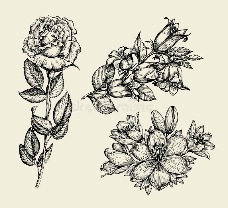 Fleurs La cloche tirée par la main de fleur de croquis, s'est levée, lis, modèle floral Illustration de vecteur illustration de vecteur