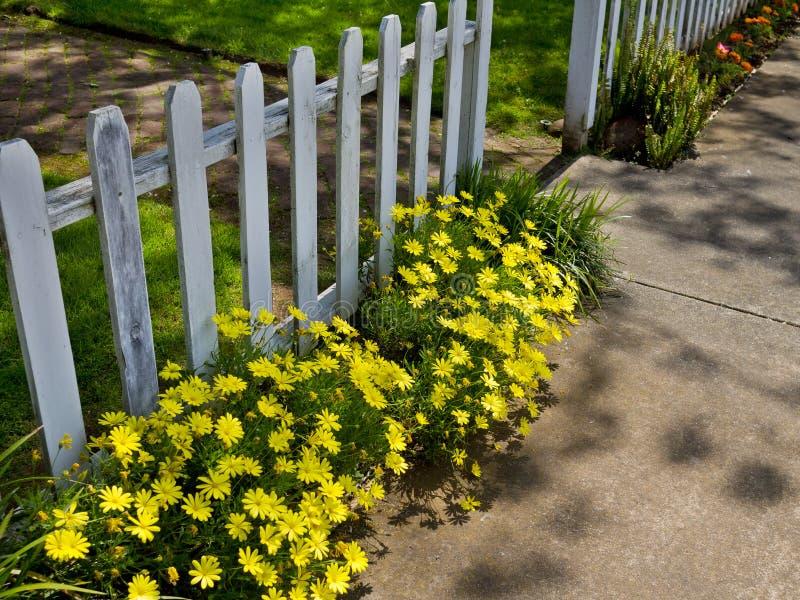 Fleurs le long du trottoir image libre de droits