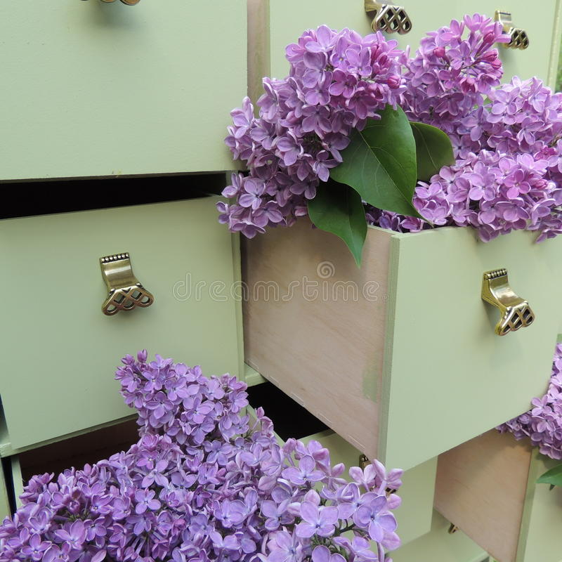 Fleurs lilas dans les tiroirs verts de raboteuse photos stock