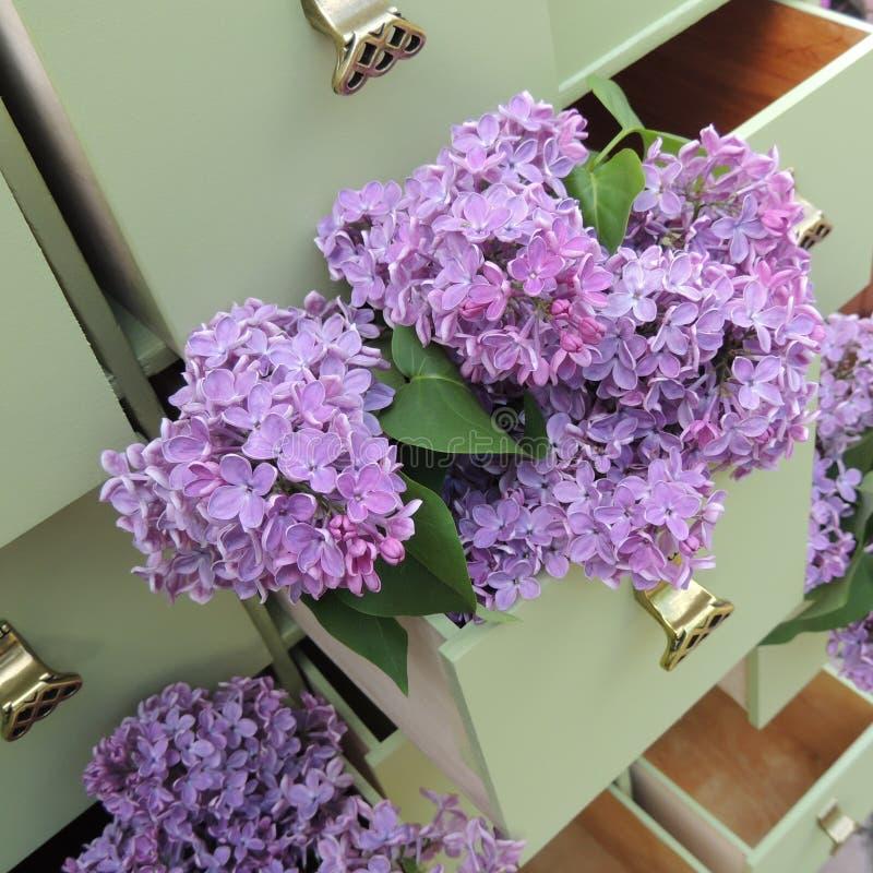 Fleurs lilas dans les tiroirs verts de raboteuse photo stock