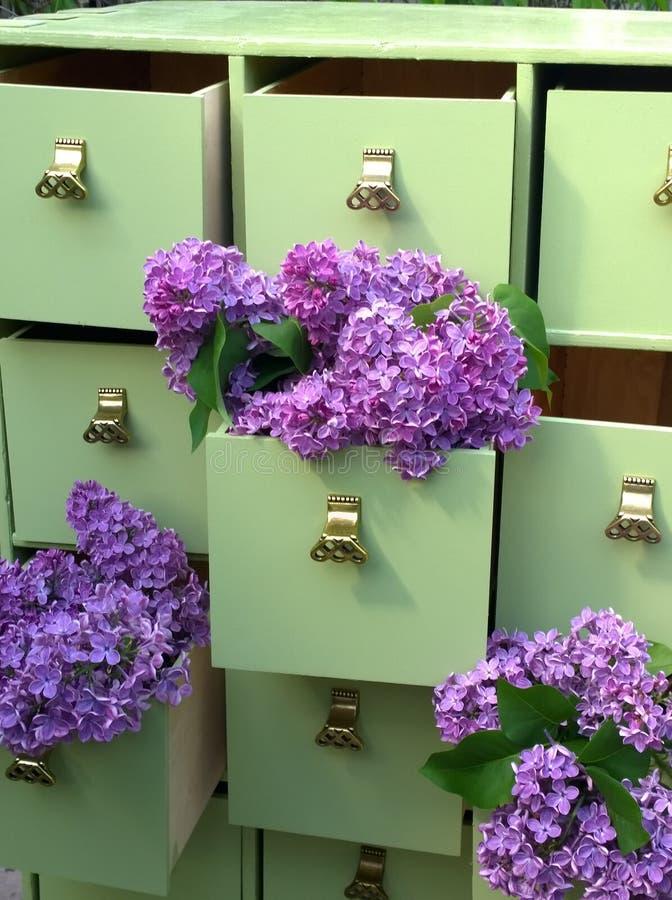 Fleurs lilas dans les tiroirs verts de raboteuse photographie stock libre de droits
