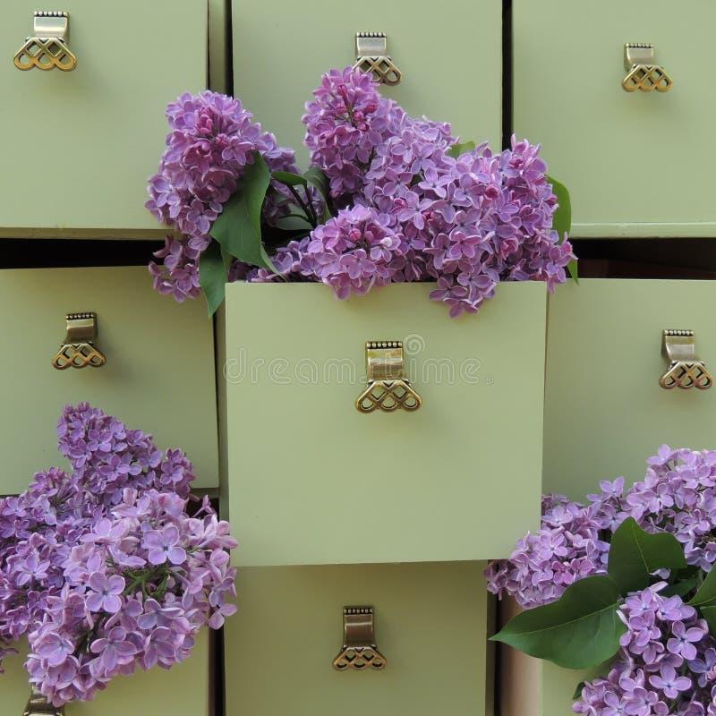 Fleurs lilas dans les tiroirs verts de raboteuse photographie stock