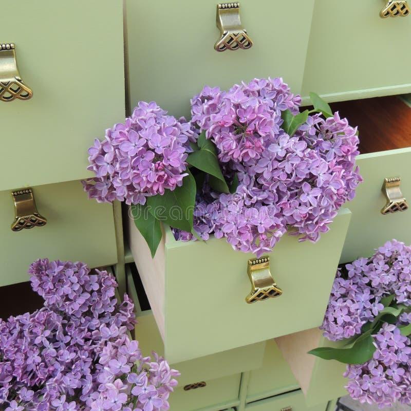 Fleurs lilas dans les tiroirs verts de raboteuse images stock