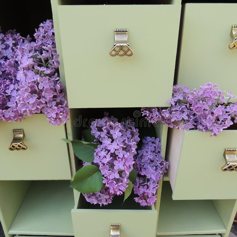 Fleurs lilas dans les tiroirs verts de raboteuse image stock
