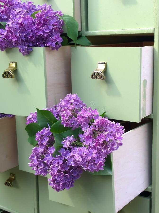Fleurs lilas dans les tiroirs verts de raboteuse photos libres de droits