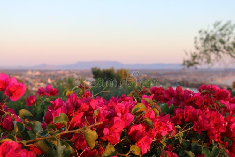 Fleurs lumineuses roses donnant sur le paysage photographie stock