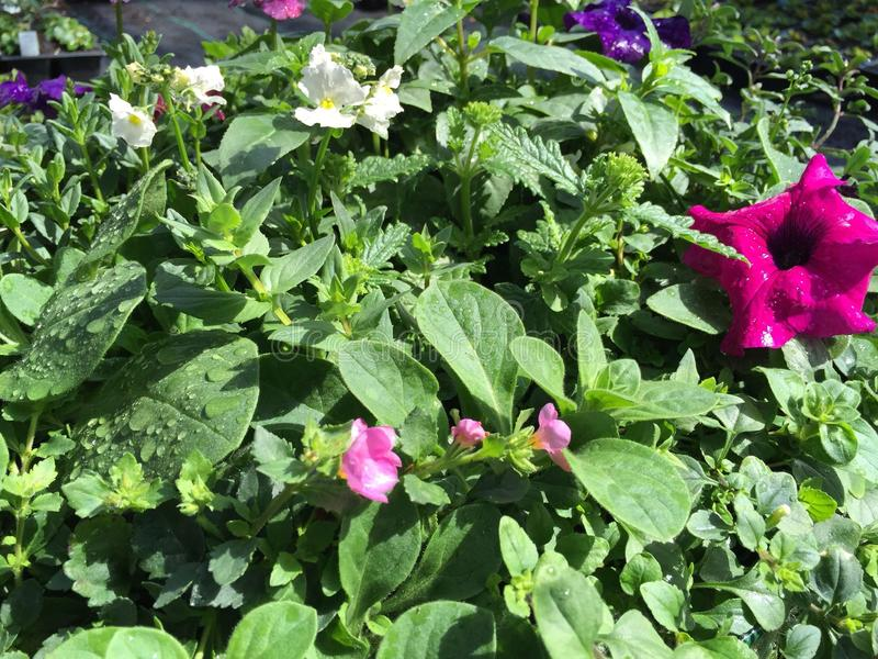 Fleurs mélangées image libre de droits